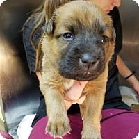 Adopt A Pet :: Kylie - Miami, FL