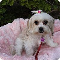 Adopt A Pet :: BEA - Newport Beach, CA
