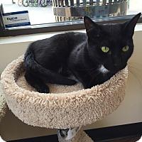 Adopt A Pet :: Miles - Cary, NC