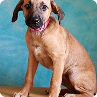 Adopt A Pet :: Darlene - Waldorf, MD