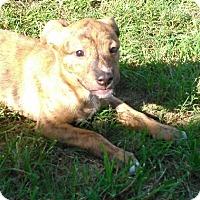 Adopt A Pet :: Ugg - Waller, TX