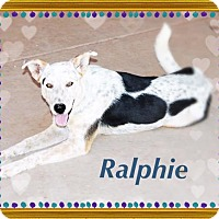 Adopt A Pet :: RALPHIE - Hiking Buddy! - Chandler, AZ
