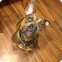 Adopt A Pet :: Letty - Centerburg, OH