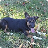 Adopt A Pet :: Lyla - Staunton, VA