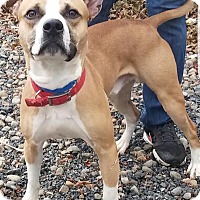 Adopt A Pet :: Skippy - Breinigsville, PA