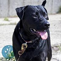 Adopt A Pet :: Jasmine - Cincinnati, OH