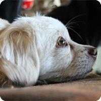 Adopt A Pet :: Mr.Magoo - Cambridge, ON