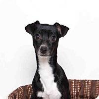Adopt A Pet :: CASSIE - Murray, UT
