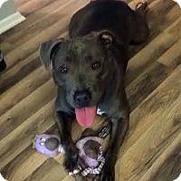 Adopt A Pet :: Cadence - Oakhurst, NJ
