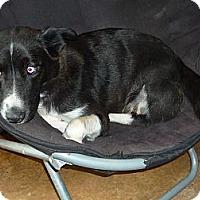Adopt A Pet :: bell - Linden, TN