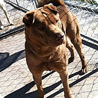 Adopt A Pet :: Sunny - Medora, IN
