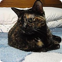 Domestic Shorthair Cat for adoption in Cambridge, Ontario - Lulu