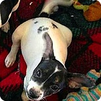 Adopt A Pet :: Kiwi - Jacksonville, FL