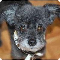 Adopt A Pet :: Tipper - Rigaud, QC