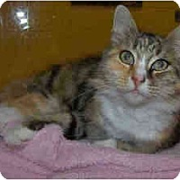 Adopt A Pet :: Fallon - Arlington, VA