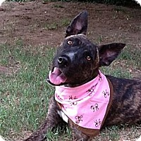 Adopt A Pet :: Adorable Daphne - Concord, CA