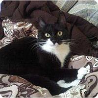 Adopt A Pet :: Ava - Easley, SC