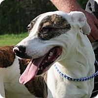 Adopt A Pet :: Marie - Albany, NY