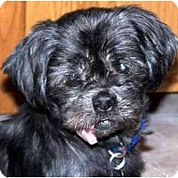 Adopt A Pet :: Mia-NY - Mays Landing, NJ