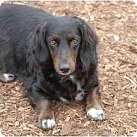 Adopt A Pet :: Raven - Ft. Myers, FL