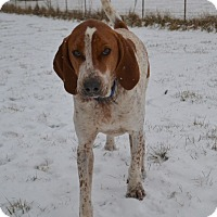 Adopt A Pet :: Randolph - Bakersville, NC