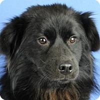 Adopt A Pet :: Bentley - Minneapolis, MN