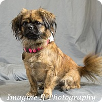 Adopt A Pet :: Reese - Oklahoma City, OK