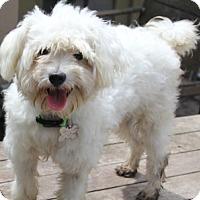 Adopt A Pet :: Elba - MEET HER! - Norwalk, CT