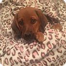 Adopt A Pet :: Sycamore