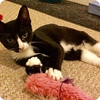 Adopt A Pet :: Jax - East Brunswick, NJ