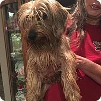 Adopt A Pet :: Benny Adoption pending - East Hartford, CT