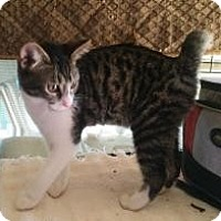 Adopt A Pet :: Wrangler Curly Tail - Mission Viejo, CA