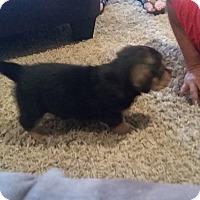 Adopt A Pet :: George - Homewood, AL