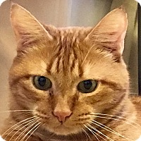 Adopt A Pet :: Jasper - make that Jaspurrrrrr - Tucson, AZ