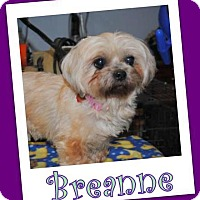 Adopt A Pet :: Breanne Trumbell - Pataskala, OH