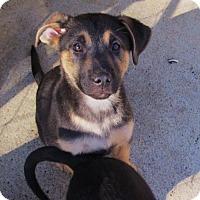 Adopt A Pet :: ZOEY - Williston Park, NY