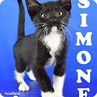 Adopt A Pet :: Simone - Carencro, LA
