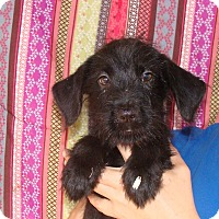 Adopt A Pet :: Bandit - Oviedo, FL