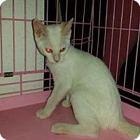 Adopt A Pet :: Ling Ting - Glendale, AZ