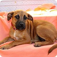 Adopt A Pet :: Parsnip - Los Angeles, CA