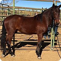 Adopt A Pet :: Ozzy - Lancaster, CA