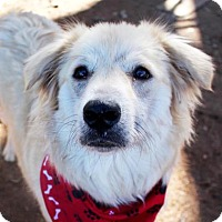 Golden Retriever/Labrador Retriever Mix Dog for adoption in Austin, Texas - Gisele