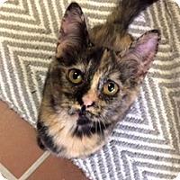 Adopt A Pet :: Francis - White Cloud, MI