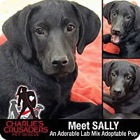 Adopt A Pet :: Sally - Spring City, PA