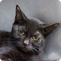 Adopt A Pet :: Louisa - Decatur, GA