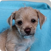 Adopt A Pet :: Hardy - Los Angeles, CA
