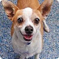 Adopt A Pet :: Meatloaf - Pico Rivera, CA