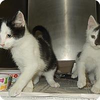 Adopt A Pet :: River & Gwen - Newport, NC
