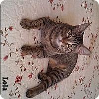 Adopt A Pet :: Lola - Fullerton, CA
