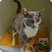 Adopt A Pet :: Melinda - Wheaton, IL